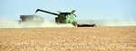 Winter wheat harvest, SW OK (1)