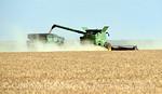 Winter wheat harvest, SW OK (4)